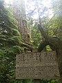 Red Creek fir sign.jpg