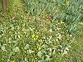Red and yellow flowers, Feneketlen-tó Park, 2016 Újbuda.jpg