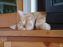 Los gatos son animales propensos a dormir durante el día.