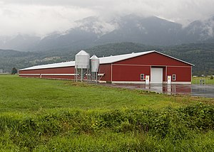 A barn housing chickens raised for meat (calle...