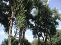 Rhein-und-Jugendpark-Köln-Hochseilgarten.JPG
