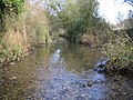 River Quin near Braughing - geograph.org.uk - 621817.jpg
