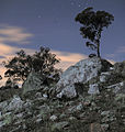 Rock and tree silhouette Canberra ACT.jpg