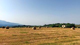 Rotoballe nella campagna fiorentina.jpg