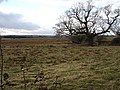 Rough pasture near Wetham Green - geograph.org.uk - 122667.jpg