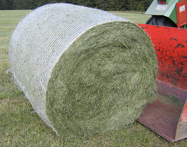 Round bales are harder to handle than square bales but compress the hay more tightly. This round bale is partially covered with net wrap, which is an alternative to twine.