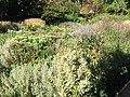 Royal Botanical Garden in Madrid 35.jpg