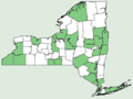 Rumex altissimus NY-dist-map.png