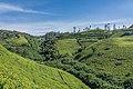 SL NuwaraEDistrict asv2020-01 img01 Labukele tea field.jpg