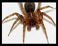 Sabrina Campagna - Spider Macro Shot (by).jpg