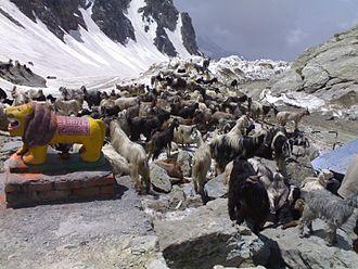 Saach Pass - Image: Sach pass gaddi