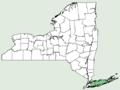 Sagittaria engelmanniana NY-dist-map.png