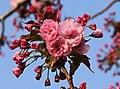 Sakura..2H1A9913WI.jpg