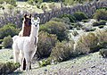 San Antonio de los Cobres - panoramio.jpg