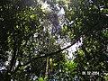 Sandoval , Tambopata - panoramio (10).jpg
