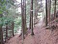 Sentier - panoramio (5).jpg