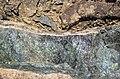 Serpentinite (= cumulate metakomatiite) (Upper Komatiitic Unit, Kidd-Munro Assemblage, Neoarchean, 2.711-2.717 Ga; southwest of the Potter Mine, east of Timmins, Ontario, Canada) 1 (47098484734).jpg
