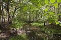 Seven Hills Bushland Reserve (7117680399).jpg