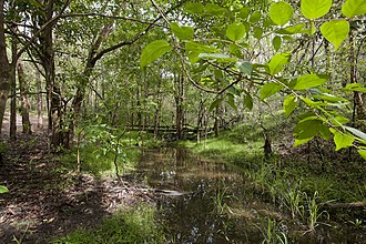Seven Hills, Queensland - Seven Hills Bushland Reserve