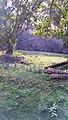 Shade of tree at noon.jpg
