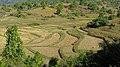 Shan Hills, Myanmar, Rice paddies in rural Myanmar between Inle lake and Kalaw mountain range.jpg