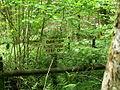 Shaptor Woods, Warning - geograph.org.uk - 1470255.jpg