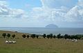 Sheep at Macawston - geograph.org.uk - 230380.jpg