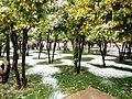 Shiraz - panoramio (20).jpg