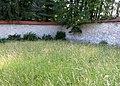 Skofja Loka Slovenia - Castle Wall 2 Mass Grave.JPG