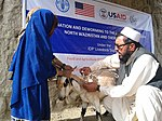 Small animals receive vaccination from Peste des Petits Ruminants (PPR) under the USAID and FAO project. (15890300790).jpg