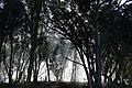 Smoky forest.jpg