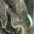 Snake House 06.jpg