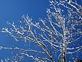 Snow from Winter Storm Skylar (12 March 2018) (south of Frenchburg, Menifee County, Kentucky, USA) 5.jpg