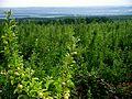 Soroca, Moldova - panoramio (20).jpg