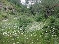 Spring flowers Milkyway.jpg