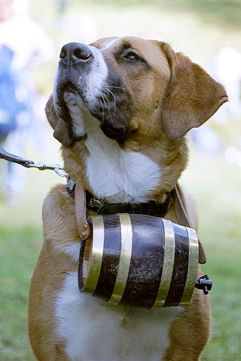 St Bernard with barrel.JPG
