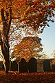 St Woolos Churchyard in Autumn.jpg