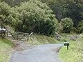Starr-010419-0054-Olea europaea subsp cuspidata-tall hedge-Kula-Maui (24236702320).jpg