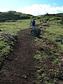 Starr-041120-0965-Cynodon dactylon-trail-Papanalahoa-Maui (24719949655).jpg
