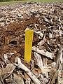 Starr-110621-6277-Vaccinium hybrid-Southern highbush cv Sharpblue plant tag-Hawea Pl Olinda-Maui (25070966396).jpg