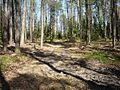 """Stary, leśny, zarośnięty już trakt zwany """"smarkowską drogą"""" przemierzany pieszo do miasta 11 km. - panoramio.jpg"""