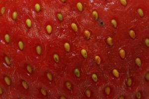 Closeup of the surface of a strawberry