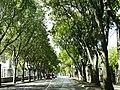 Street in Pula 21.jpg