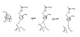 Xylose isomerase - ring opening mechanism of glucose