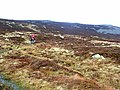 Summit plateau of Carrock Fell - geograph.org.uk - 1046724.jpg