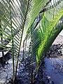 Sundarban (12).jpg