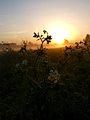 Sunrise in meadow.jpg