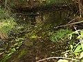 Swan Creek in Sussex County, Delaware.jpg