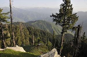Forestry in Pakistan - Miandam Swat