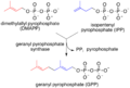 Synthesis of geranyl pyrophosphate.png